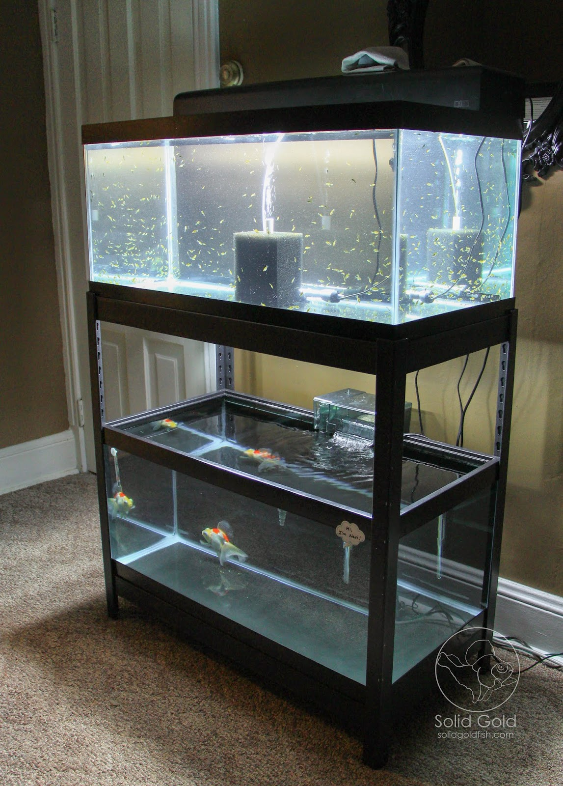 The Perfect Rack for 40 Gallon Tanks