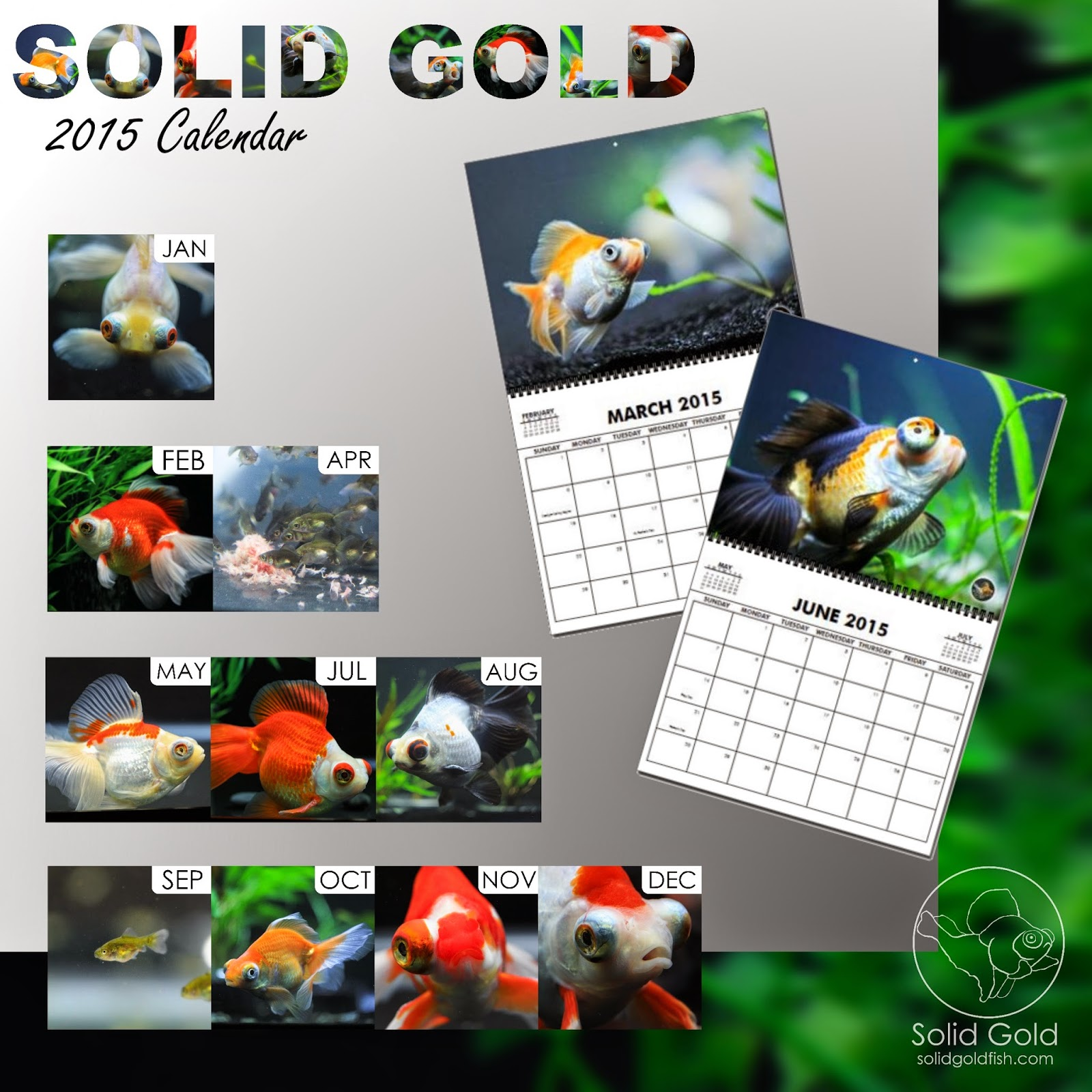 2015 SOLID GOLD Calendar!